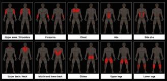 Fond noir de parties du corps masculines de diagramme de muscle illustration stock