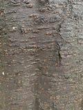 Fond noir de tronc d'arbre photo libre de droits