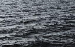 Fond noir et blanc de l'eau Photographie stock libre de droits