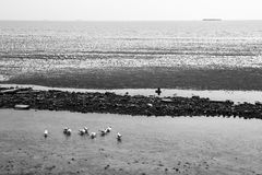fond noir et blanc de paysage marin images stock