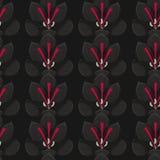Fond noir sans couture avec les crocus gris Safran Configuration sans joint Photo stock