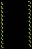 Fond noir vertical avec des verres de jus d'orange Images libres de droits