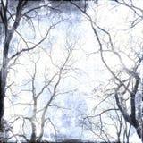 Fond nu de branches Sons bleus images libres de droits