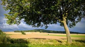Fond nuageux d'arbre ensoleillé Photo stock