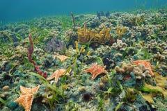 Fond océanique coloré avec des étoiles de mer sur le récif coralien Photo stock