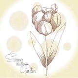 Fond ocre avec un tulipe Images stock