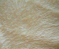 Fond ondulé de cache de sofa de laines Photos libres de droits