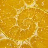 Fond orange de fractale d'abrégé sur remous de spirale de tranche Modèle orange de fond de spirale de tranche Nourriture orange a Photos libres de droits