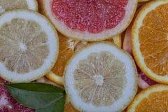 Fond orange de pamplemousse et de citron Photo libre de droits
