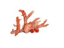 Fond orange de vecteur d'aquarelle de safran des indes Images stock