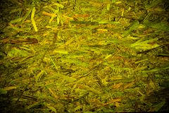 Fond organique abstrait vert de texture Photos libres de droits