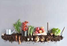 Fond organique de jardin de fruits et légumes Images stock