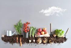 Fond organique de jardin de fruits et légumes Image stock