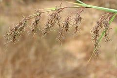 Fond ou papier peint de modèle d'herbe de Brown Photographie stock libre de droits