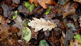 Fond ou texture d'automne Gouttes de pluie sur les feuilles tombées dans le r Photographie stock