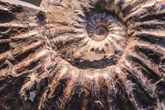 Fond ou texture d'une pierre sous forme de coquille d'un escargot Couleur de Brown Ammonite précieuse Matériel naturel et solide images stock