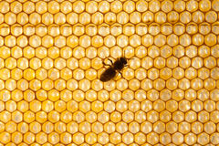 Fond ou texture de peigne de miel Photos stock