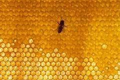 Fond ou texture de peigne de miel Image libre de droits