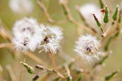 Fond pelucheux d'été de fleurs sauvages Profondeur de zone, orientation sélectrice image stock