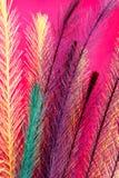 Fond plumeux coloré Images libres de droits