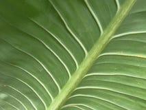 Fond plus audacieux vert de feuille Photos stock