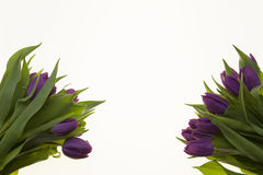 Fond pour la carte de voeux avec des tulipes de fleurs Carte avec des fleurs pour épouser l'anniversaire d'invitations Photo stock