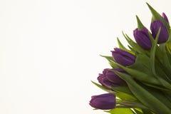 Fond pour la carte de voeux avec des tulipes de fleurs Carte avec des fleurs pour épouser l'anniversaire d'invitations Image libre de droits