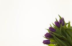 Fond pour la carte de voeux avec des tulipes de fleurs Carte avec des fleurs pour épouser l'anniversaire d'invitations Photos libres de droits