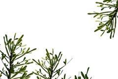 Fond pour le texte, feuilles de vert d'isolement sur le blanc Images stock