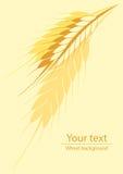 Fond pour un label ou une affiche avec une photo des oreilles de blé illustration stock