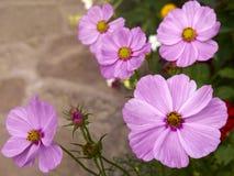 Fond pourpré de fleur Image stock