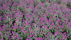 Fond pourpré de fleur Photographie stock libre de droits