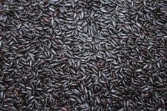 Fond pourpré noir de riz Image libre de droits