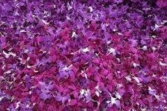 Fond pourpre de mur d'orchidée Image stock