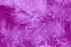 Fond pourpre de plumes - images courantes romantiques Photographie stock libre de droits