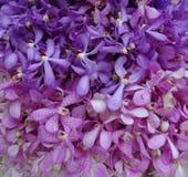 Fond pourpre et rose de mur d'orchidée Images libres de droits