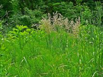 Fond profond d'herbe de ressort juteux vert photographie stock libre de droits