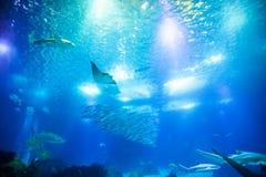 Fond profond sous-marin Photo stock