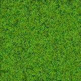 Fond réaliste naturel de texture d'herbe verte Calibre de dessus d'herbe du football Images libres de droits