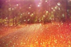 Fond rêveur de bokeh de forêt Photographie stock libre de droits