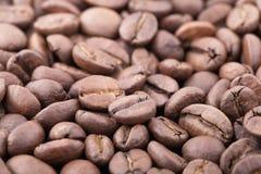 Fond rôti de grains de café de sidamo Image libre de droits