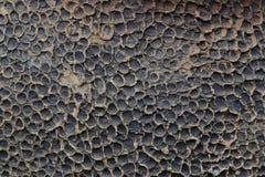 Fond rayé de texture d'écorce Photographie stock