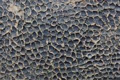 Fond rayé de texture d'écorce Photo libre de droits
