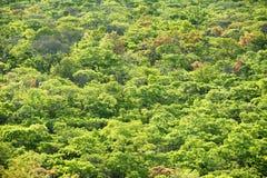 Fond - régions boisées de Brachystegia Image stock