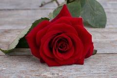 Fond romantique avec la rose de rouge Images stock