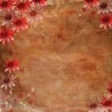 Fond romantique de fleur Images libres de droits