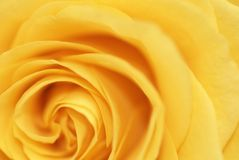 Fond romantique de rose de jaune Photo stock