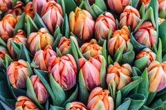 Fond romantique de tulipes de jardin Photos libres de droits