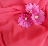Fond rose Image stock