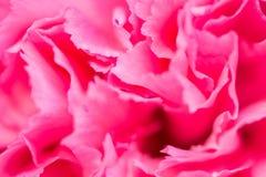 Fond rose abstrait de fleur de pivoine utilisé comme illustr de fond Photographie stock libre de droits